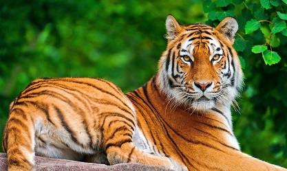 Essay On Save Tiger In Hindi