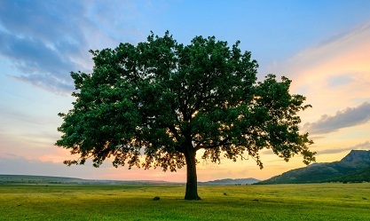 Short Essay On Save Trees In Hindi